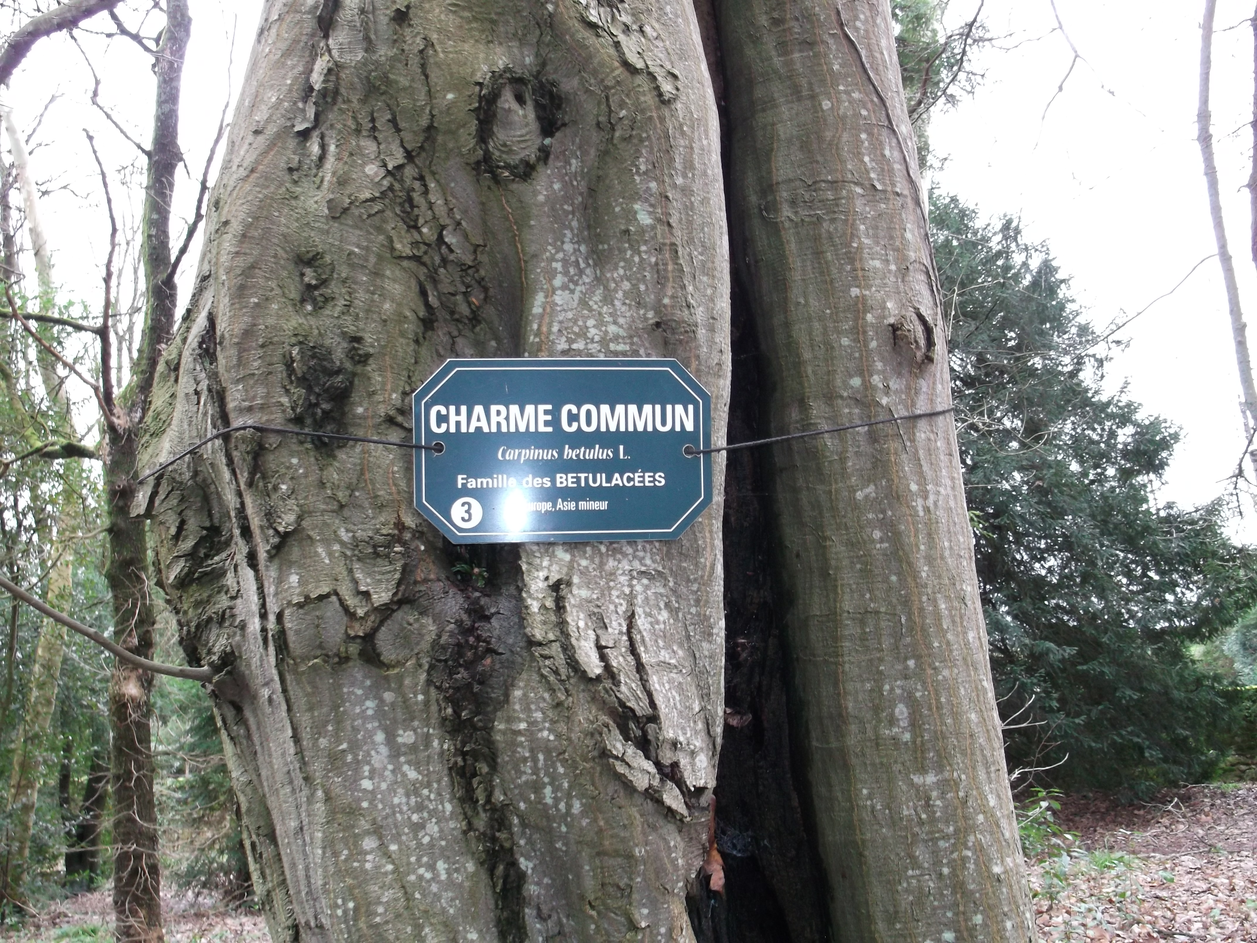 Charme Commun Conseil Jardinage Application En
