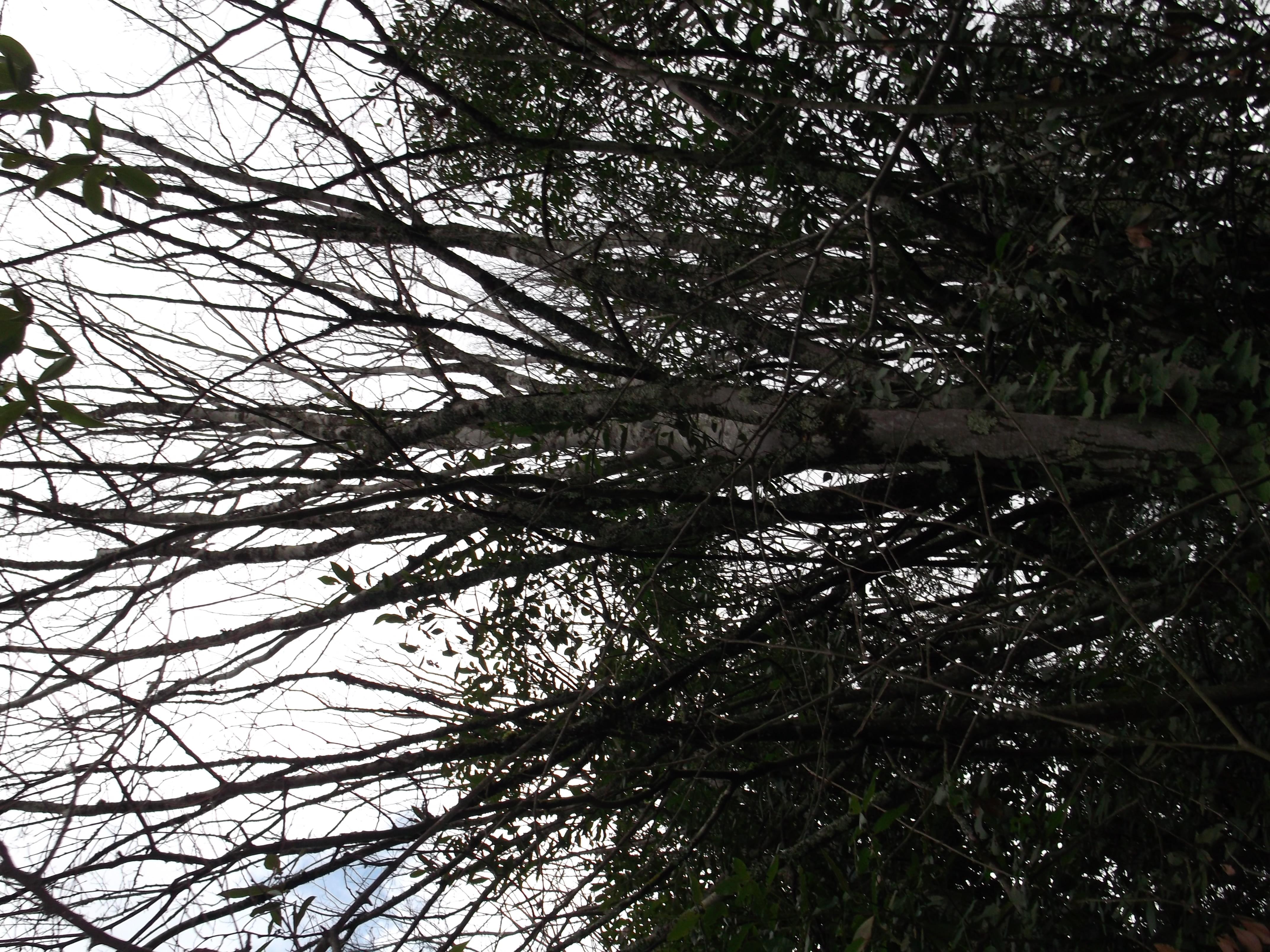 Zelkova conseil jardinage application en phytoth rapie for Conseil jardinage