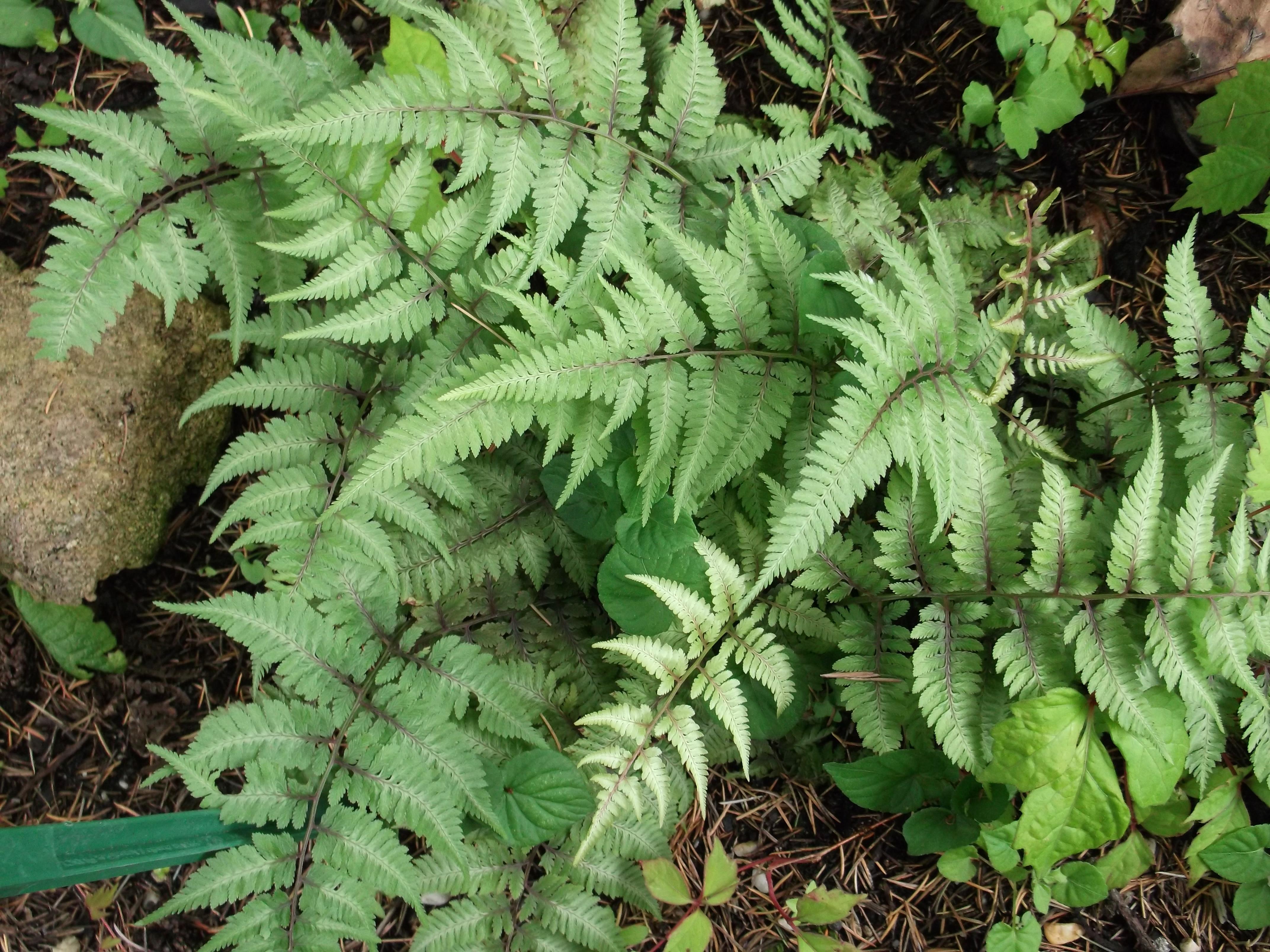 Foug res conseil jardinage application en phytoth rapie for Conseil jardinage