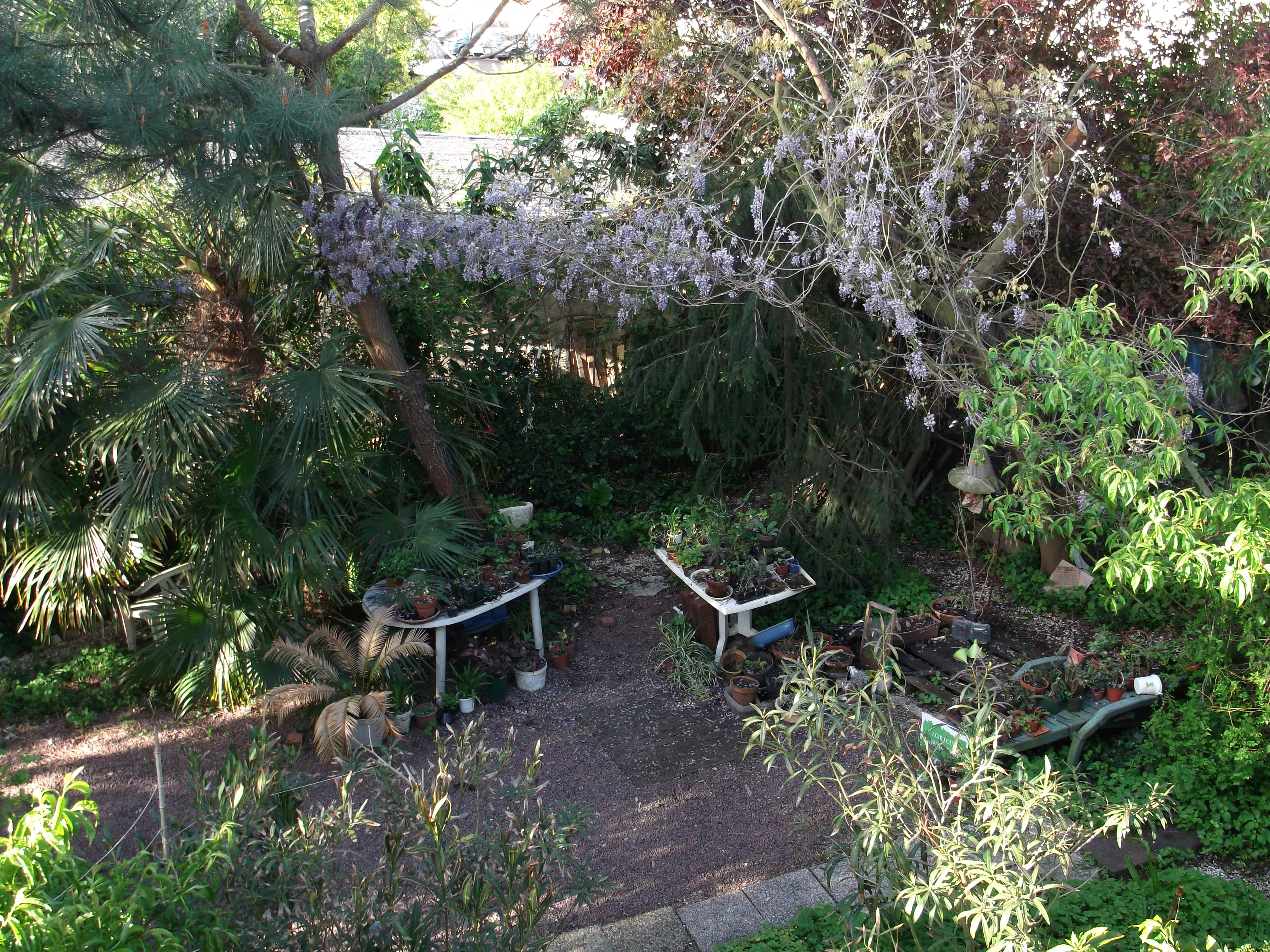 Glycines conseil jardinage application en phytoth rapie for Conseil jardinage